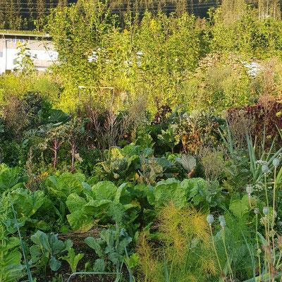 Mischkultur, Samenbildung, begrünte Wege schafft eine natürliche Ästhetik.