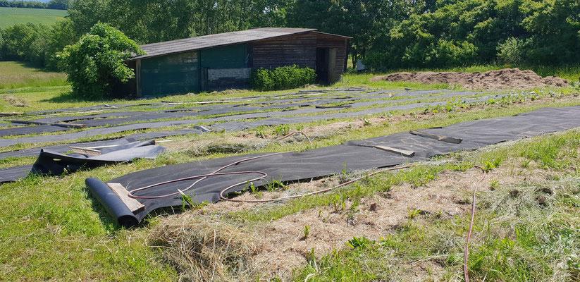Das Bodengewebe ist wichtig; Silage und Biofaser allein können nicht vollständig verdunkeln.