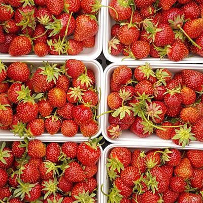 Nichts schmeckt besser als Freilanderdbeere
