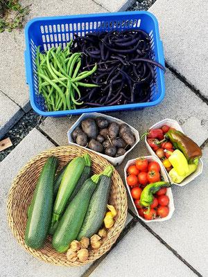 Eine schöne Ernte für eigenen Bedarf am 17. September 21.