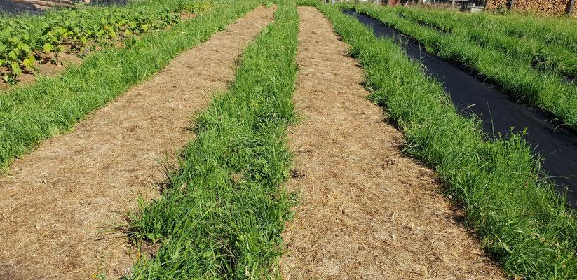 Weil die ersten Beete im oberen Bereich soweit sind, geht es nss Auspflanzen und Aussäen.