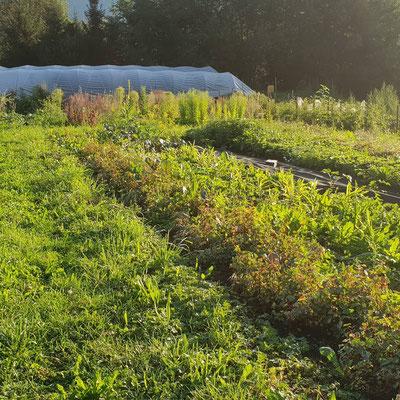Breite Wege dienen als Wiese und damit Futterstellen für Nützlinge sowie Quellen von Mulch.