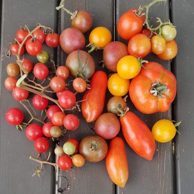 Tomatenvielfalt, 29. September 2021