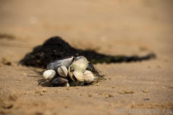 Muscheln mit Seetang