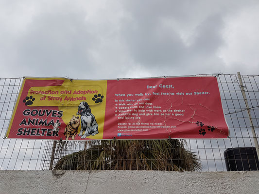Der Gouves Shelter kümmert sich um die vielen heimatlosen und kranken Katzen und Hunde auf der griechischen Insel Kreta.
