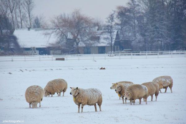 214.Winterwereld, Sint Pancras