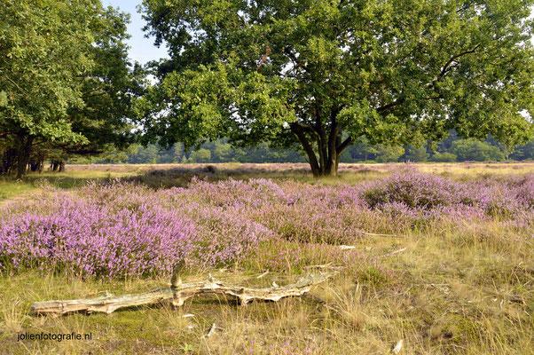 143. Heide bij Hilversum