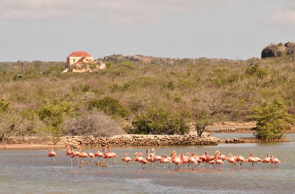 95. Flamingo's in zoutpannen