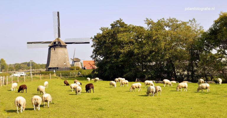 18. Hoornse vaart Alkmaar