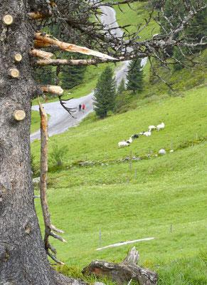 3. Zell am Ziller, Zillertal
