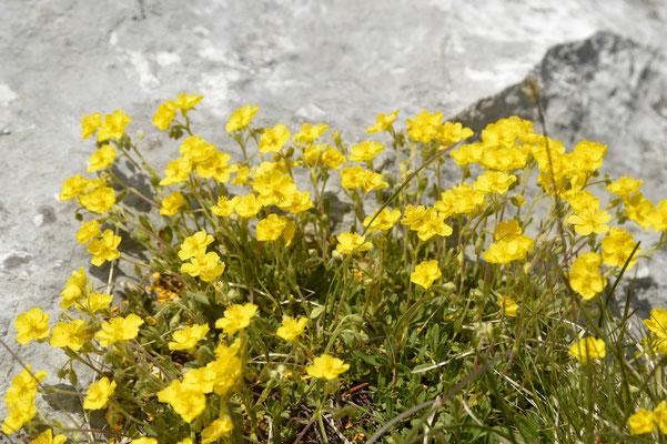 13. Steinplatte, Waidring, Pillerseetal
