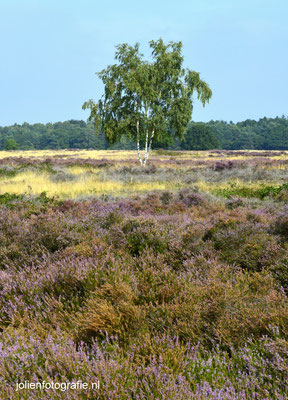 145. Heide bij Hilversum