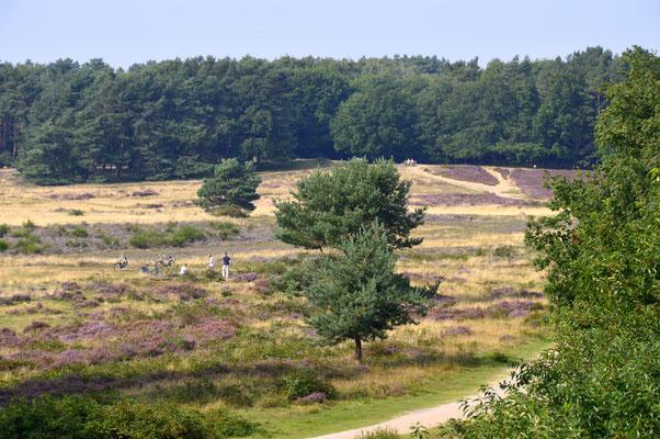 151. Heide bij Hilversum