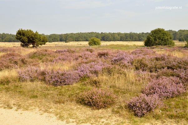 149. Heide bij Hilversum