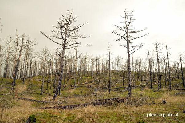 62. Verbrande duinen Schoorl
