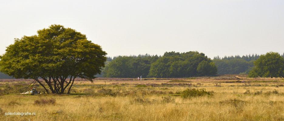 152. Heide bij Hilversum
