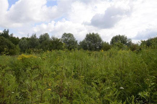 Marais de Baillon