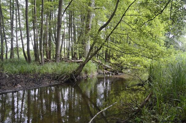 Marais de Baillon, la Thève