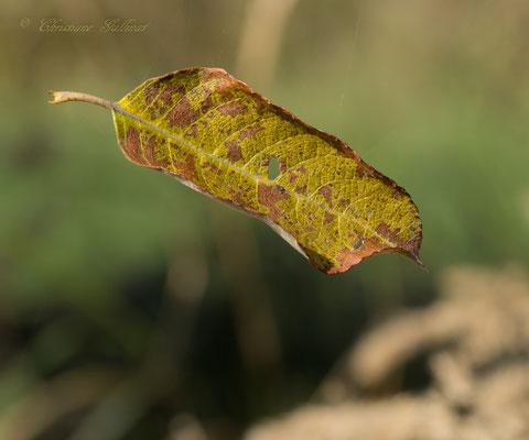 scheinbares Schweben, ein Zauber der Natur