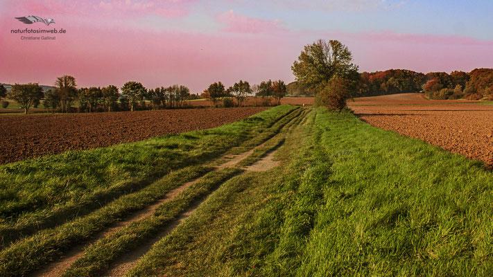 Naturschutz zwischen Ackerbau, das geht!