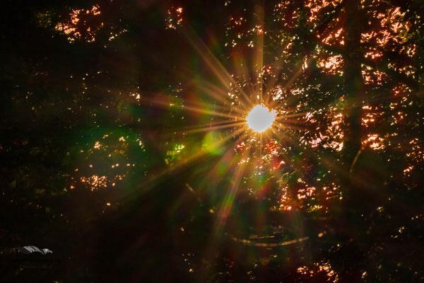 sonniger Blick durch die Bäume