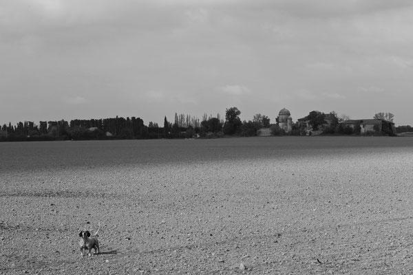 AVIGNON, FRANCE - 2013