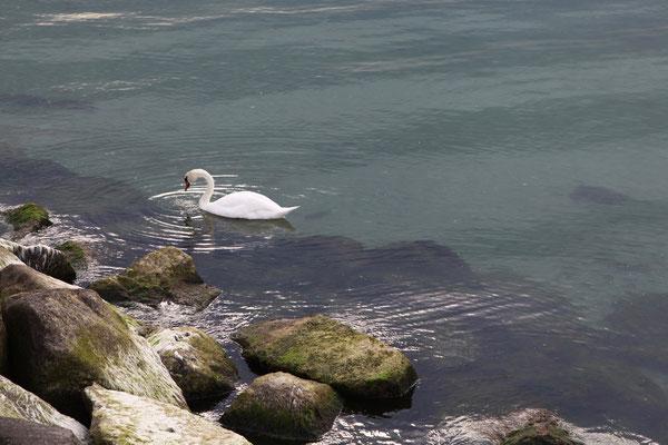 POEL ISLAND, GERMANY - 2019