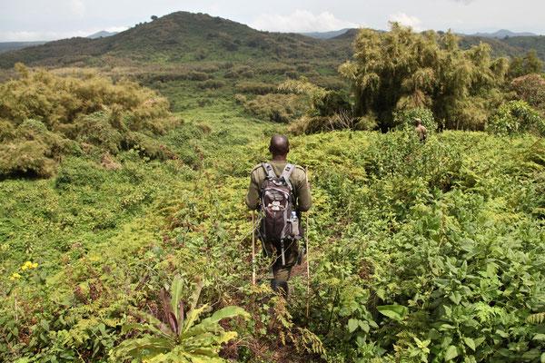 VOLCANOES NATIONAL PARK, RWANDA - 2016