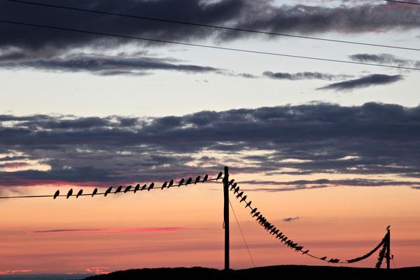 BUSHMILLS, NORTHERN IRELAND - 2012