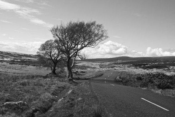 WICKLOW MOUNTAINS, IRELAND - 2010