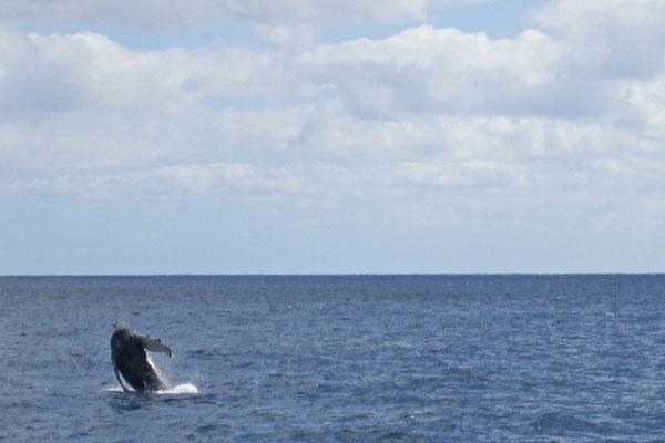 HONOLULU-HAWAII, USA - 2005