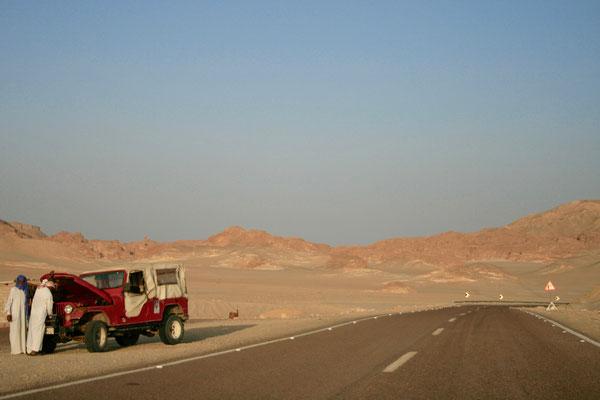 SINAI, EGYPT - 2010