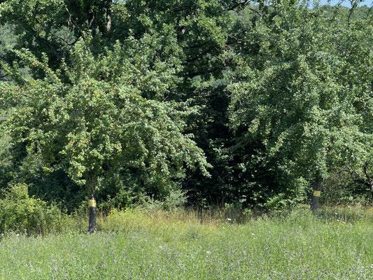 Standort: Kläranlage rechts unten / Apfelbäume