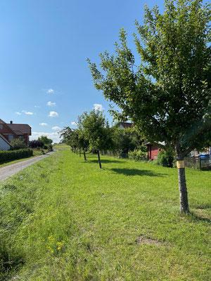 Standort: Kreuzung Ekkehardusstraße und Oberes Lehen / Apfel- und Birnbäume
