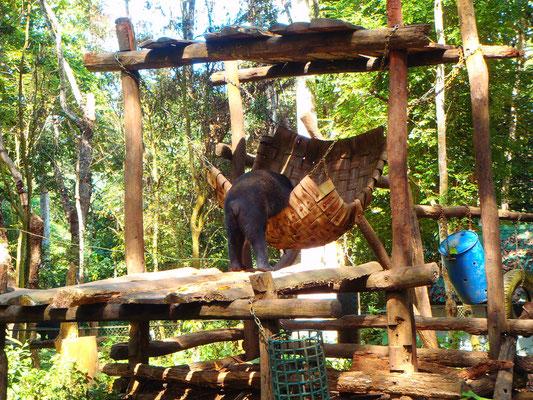 .....Bärenpark oder besser Auffangstation.......die Laoten nehmen die Bären aus den Fängen von chinesischen Wilderern....