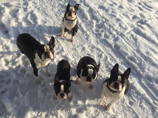 Winterspaziergang mit Benc und