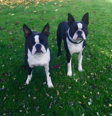 Calu mit seinem Bruder Baxter