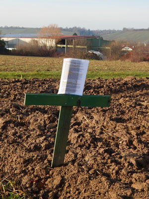 Grünes Kreuz auf Feld bei Pfaffenhofen, das bald einem Gewerbegebiet weichen soll, wenn die Umgehungsstraße Pfaffenhofen-Güglingen gebaut wurde