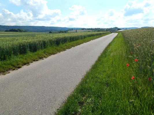 Weitere Felder für Gewerbe am Radweg Richtung Pfaffenhofen