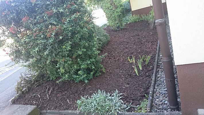 Neuanpflanzungen und Gestaltung