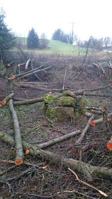 Baumfällungen und  Problemfällungen