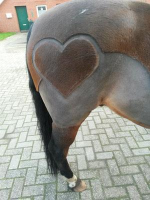 Motive Scherservice Ostfriesland Pferde Scheren