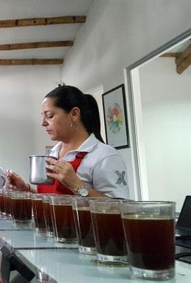 Qualitätskontrolle Kolumbien Maragogype