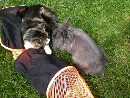 Caline & Mystie(notre chatte)