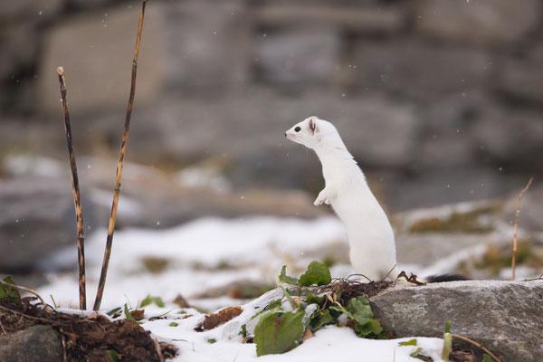 In posa mentre inizia a nevicare