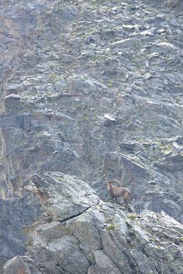 Tra le rocce