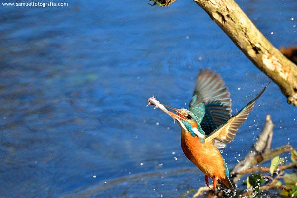 In volo con pesce
