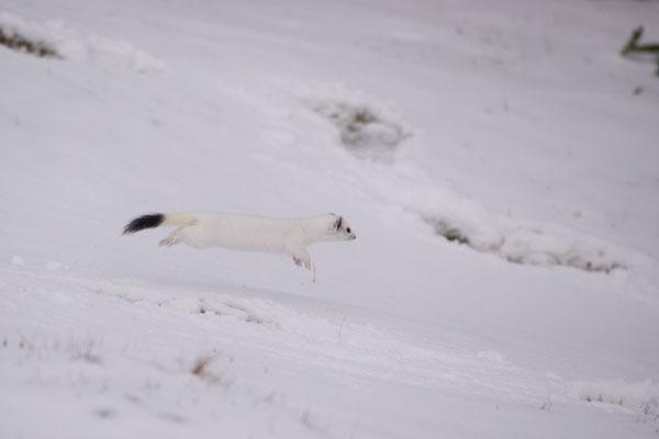Salto nella neve