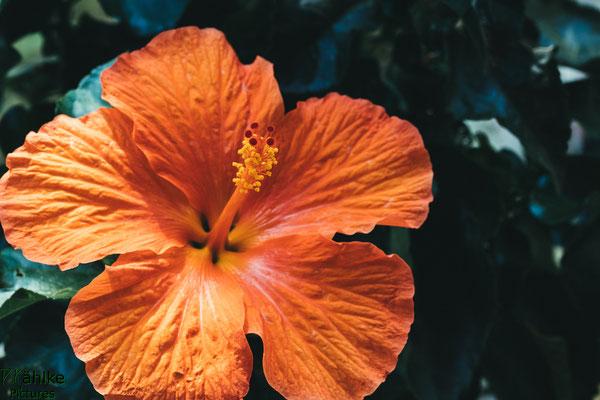 Canon 80D | Sigma 105mm 2.8 Macro | Blende: 8 | Verschlusszeit: 1/160sek. | ISO: 800