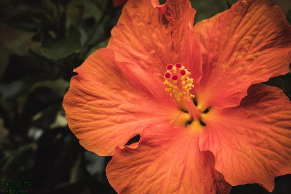 Canon 80D | Sigma 18-35mm 1.8 (35mm) | Blende: 8 | Verschlusszeit: 1/125sek. | ISO: 500
